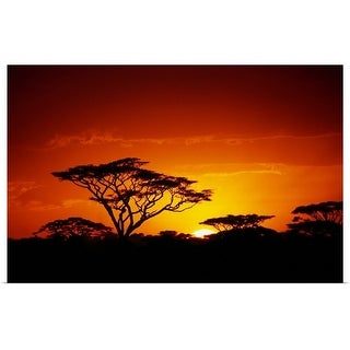 """Acacia trees silhouetted at sunset"" Poster Print"
