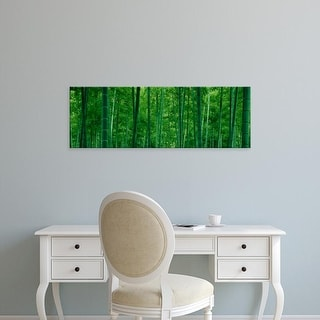 Easy Art Prints Panoramic Images's 'Bamboo trees in a forest' Premium Canvas Art