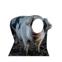 Advanced Graphics 2292 42 x 45 in. Pig Standin Cardboard Standup