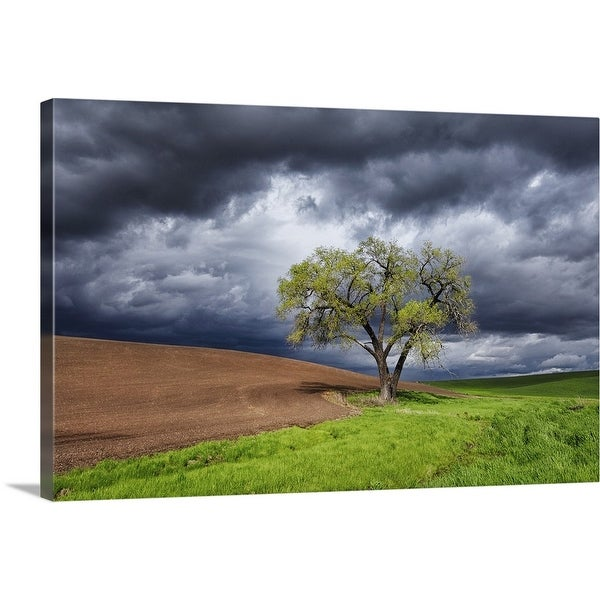 """Sole witness to the drama, Washington State"" Canvas Wall Art"