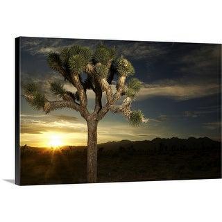 """Joshua Tree at Sunset"" Canvas Wall Art"
