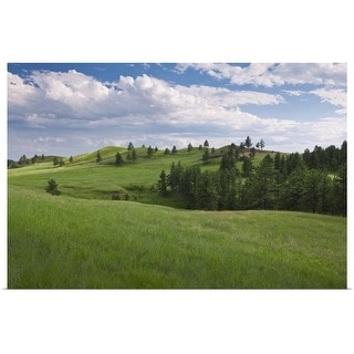 """""""USA, South Dakota, Meadow in Custer State Park"""" Poster Print"""