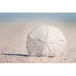 Sand Dollar on Beach - Lantern Press Photography (Playing Card Deck - 52 Card Poker Size with Jokers)