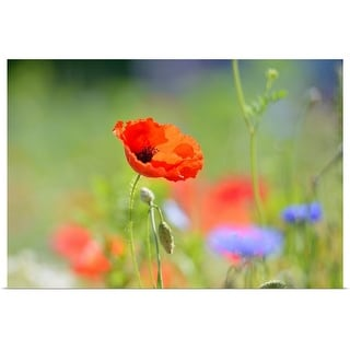 """""""Red poppy and flowers"""" Poster Print"""