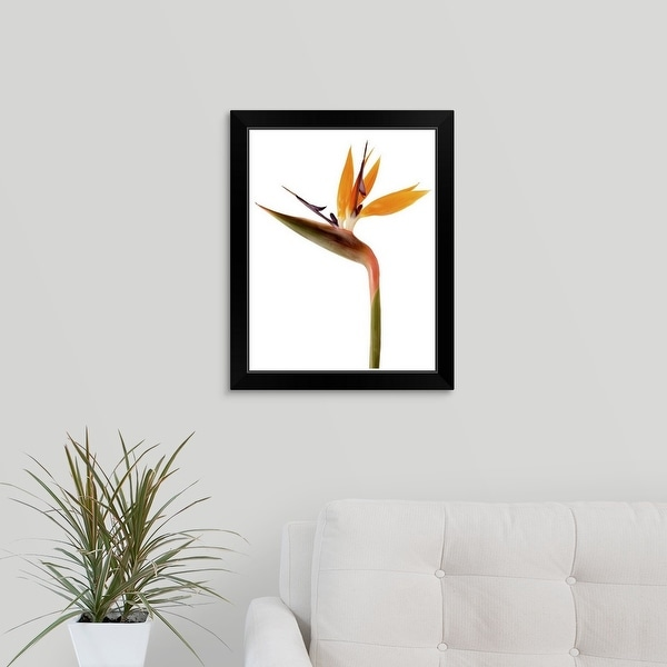 """Bird of Paradise"" Black Framed Print"