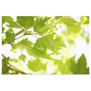 """Sun shining through green leaves"" Poster Print"