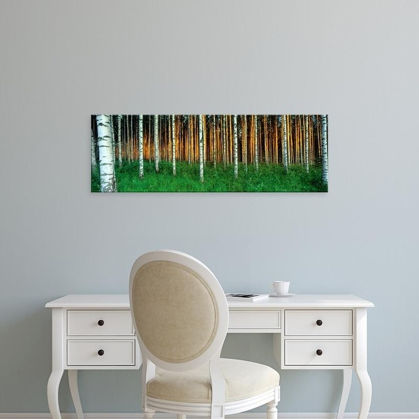 Easy Art Prints Panoramic Images's 'Birch Trees, Saimma, Lakelands, Finland' Premium Canvas Art