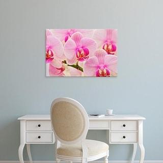 Easy Art Prints Adam Jones's 'Hybrid Orchids' Premium Canvas Art
