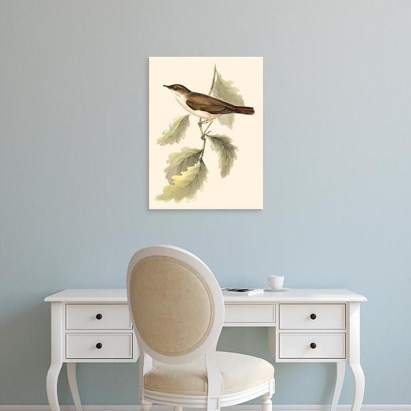 Easy Art Prints John Gould's 'Gould's Nightingale' Premium Canvas Art