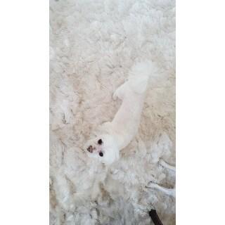 Safavieh Handmade Silken Glam Paris Shag Ivory Rug - 8' x 10'