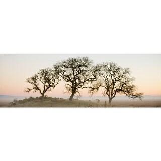 Easy Art Prints Alan Blaustein's 'Oak Tree #30' Premium Canvas Art