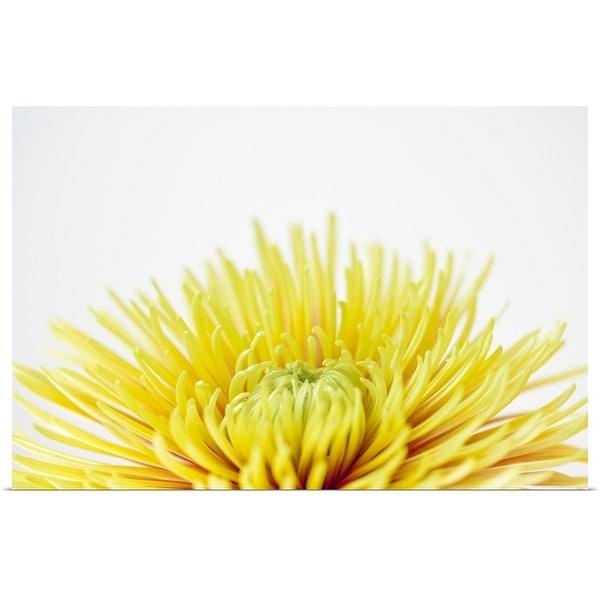 """Close up of Chrysanthemum flower head"" Poster Print"