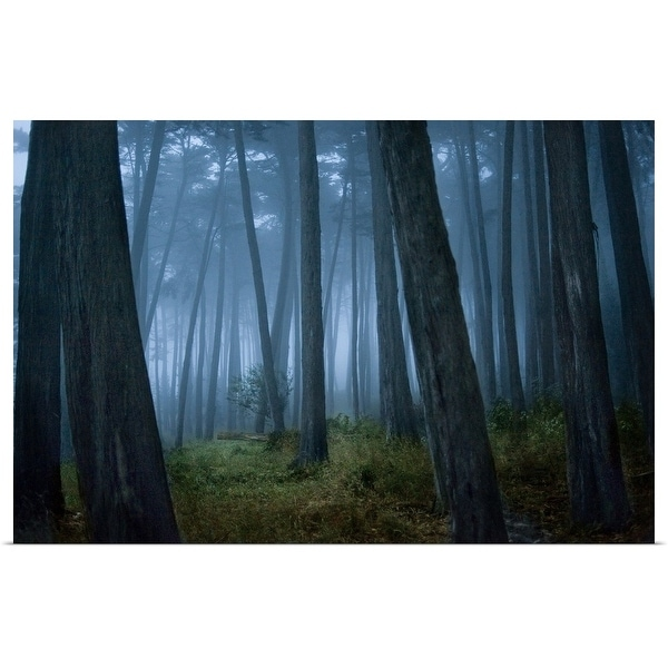 """""""Clearing in Cypress tree forest"""" Poster Print"""