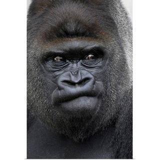 """Gorilla gorilla"" Poster Print"