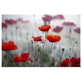 """Red poppy flowers"" Poster Print"