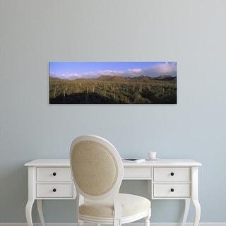 Easy Art Prints Panoramic Image 'Saguaro Cactus in a desert, Saguaro National Park, New Mexico, Arizona' Canvas Art