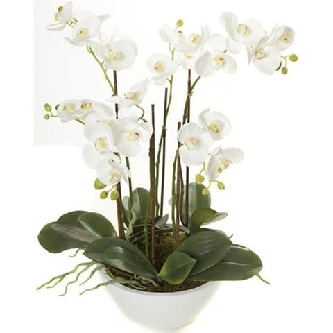 Autograph Foliages P-110820 24 in. Phalaenopsis In Pot White