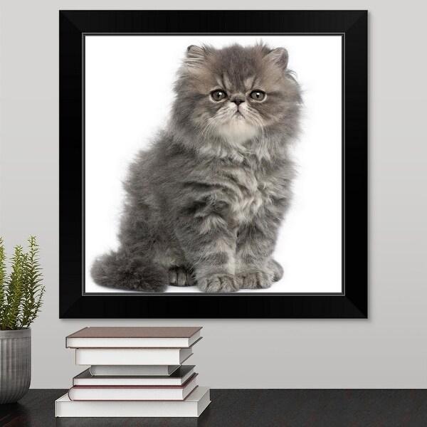 """""""Persian Kitten (2 months old) sitting"""" Black Framed Print"""