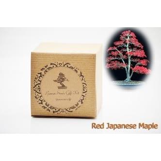 9greenbox Bonsai Seed Kit Red Japanese Maple Bonsai Overstock 17825076