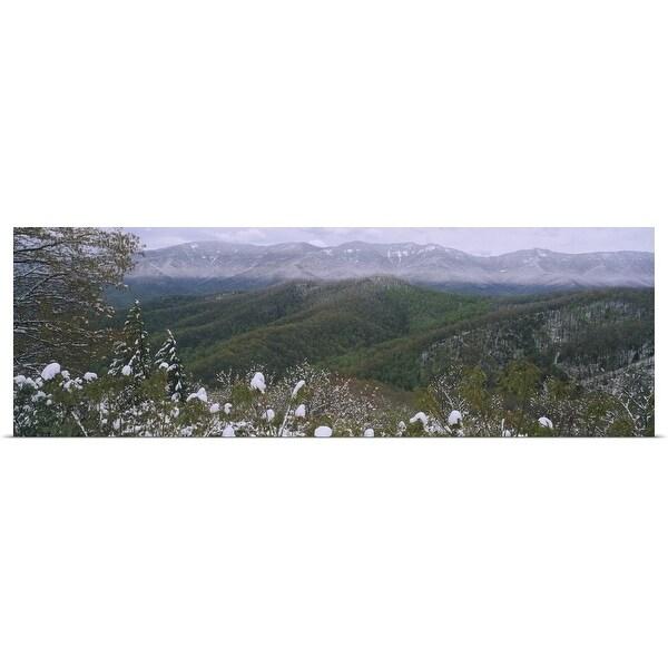"""Plants on a mountain, Blue Ridge Mountains, Mount Mitchell, North Carolina"" Poster Print"