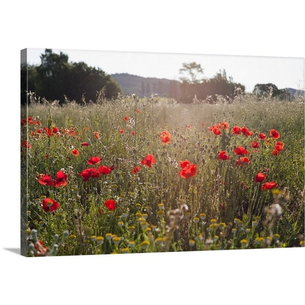 Shop premium thick wrap canvas entitled field of poppy flowers premium thick wrap canvas entitled field of poppy flowers multi color mightylinksfo