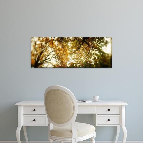 Easy Art Prints Panoramic Image 'Autumn trees, Volunteer Park, Capitol Hill, Seattle, King, Washington' Canvas Art