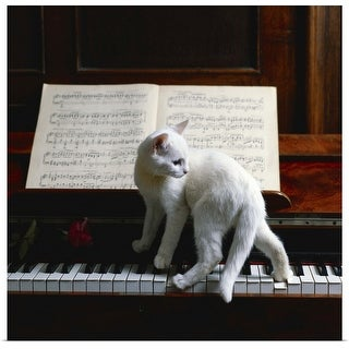 """Cat on piano"" Poster Print"
