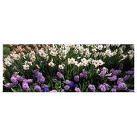 Poster Print entitled High angle view of flowers in spring, Botanical Gardens of Buffalo & Erie County, Buffalo, New