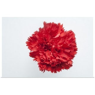 """""""Close up of flower head of red carnation"""" Poster Print"""