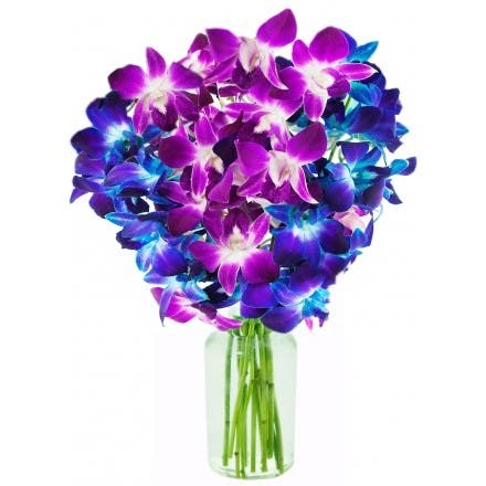 KaBloom: Exotic Orchid Bouquet of 5 Blue & 5 Purple Dendrobium Orchids from Thailand with Vase