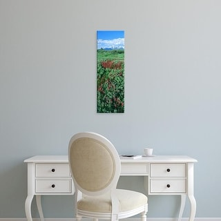 Easy Art Prints Panoramic Images's 'Elephant Head flowers, Teton Range, Grand Teton National Park, Wyoming' Canvas Art