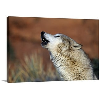 Premium Thick-Wrap Canvas entitled Wolf Howling