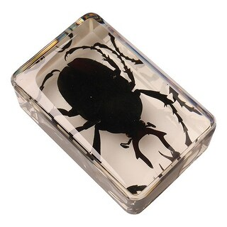Instant Insect Collection Set - 12 Cubes - multi