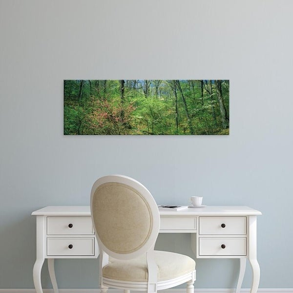 Easy Art Prints Panoramic Images's 'Forest, Trail of Tears, Shawnee National Forest, Illinois, USA' Premium Canvas Art