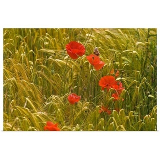 """""""Red poppy flowers in wheat field"""" Poster Print"""