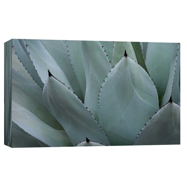 "PTM Images 9-103755 PTM Canvas Collection 8"" x 10"" - ""Whale's Tongue Agave"" Giclee Succulents Art Print on Canvas"