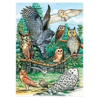 Outset Media Games OM58810 North American Owls Tray Puzzle 35 pcs