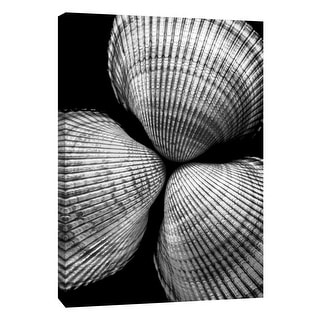 """PTM Images 9-108388  PTM Canvas Collection 10"""" x 8"""" - """"Seashell Sight II"""" Giclee Shells Art Print on Canvas"""