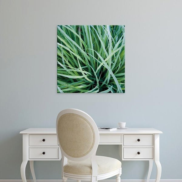 Easy Art Prints Jan Bell's 'Grass with Morning Dew' Premium Canvas Art