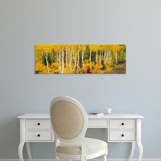 Easy Art Prints Panoramic Images's 'Aspen trees in autumn, Dixie National Forest, Utah, USA' Premium Canvas Art
