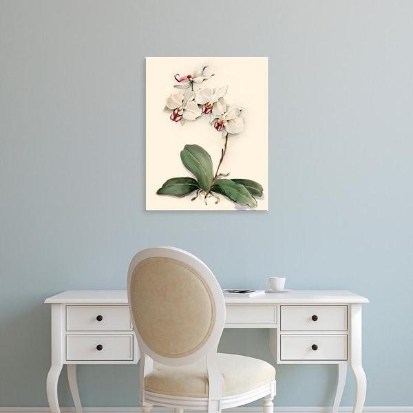 Easy Art Prints Joy Waldman's 'Phalaenopsis Red Throat Orchid' Premium Canvas Art