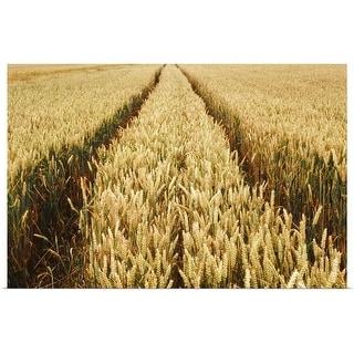 """cornfield"" Poster Print"