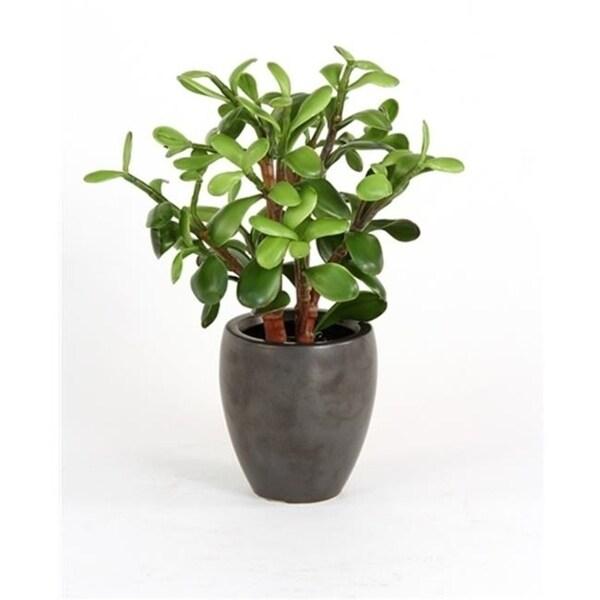 DDI 2632-2 Silk Greenery - Jade Plant in a Matte Black Metallic Plum Pot - Pack of - 2