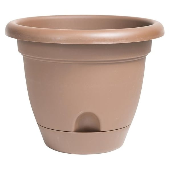 Shop Bloem Lp0645 6 In Lucca Self Watering Planter Chocolate