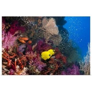 """Coral reef"" Poster Print"