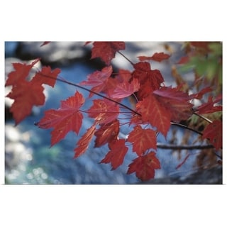 """""""Foliage on maple tree branch"""" Poster Print"""