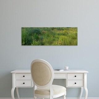 Easy Art Prints Panoramic Images's 'Plants in prairie, Illinois, USA' Premium Canvas Art