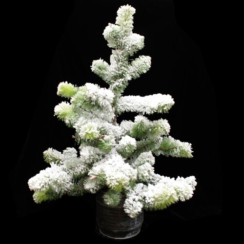 Flocked Snow Pine Tree