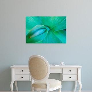 Easy Art Prints Brent Bergherm's 'Agave Plant Detail' Premium Canvas Art