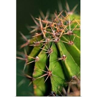 """""""Cactus, close up"""" Poster Print"""